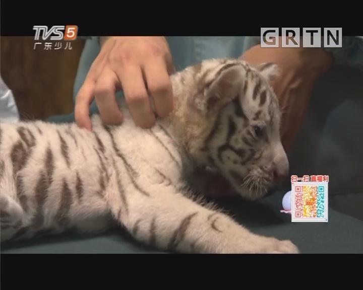 [2018-09-01]动物笑当家