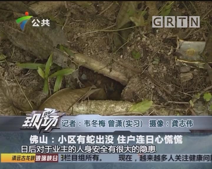 佛山:小区有蛇出没 住户连日心慌慌