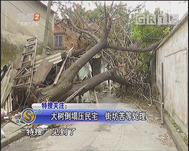大树倒塌压民宅 街坊苦等处理