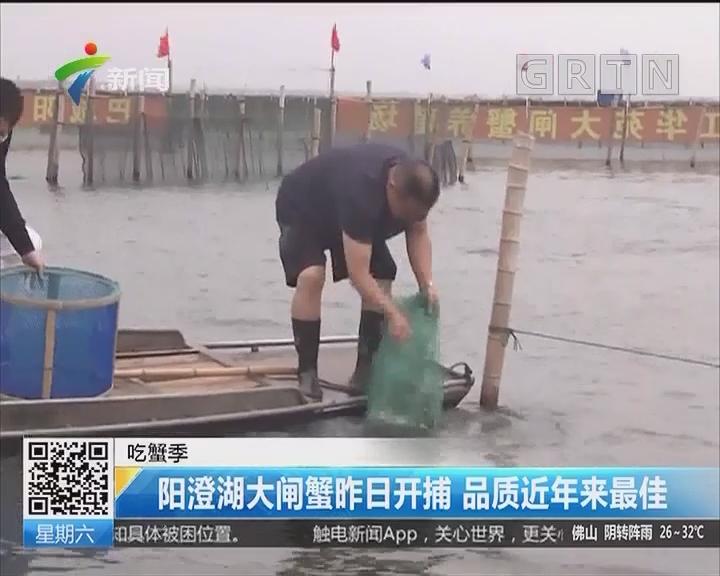 吃蟹季:阳澄湖大闸蟹昨日开捕 品质近年来最佳