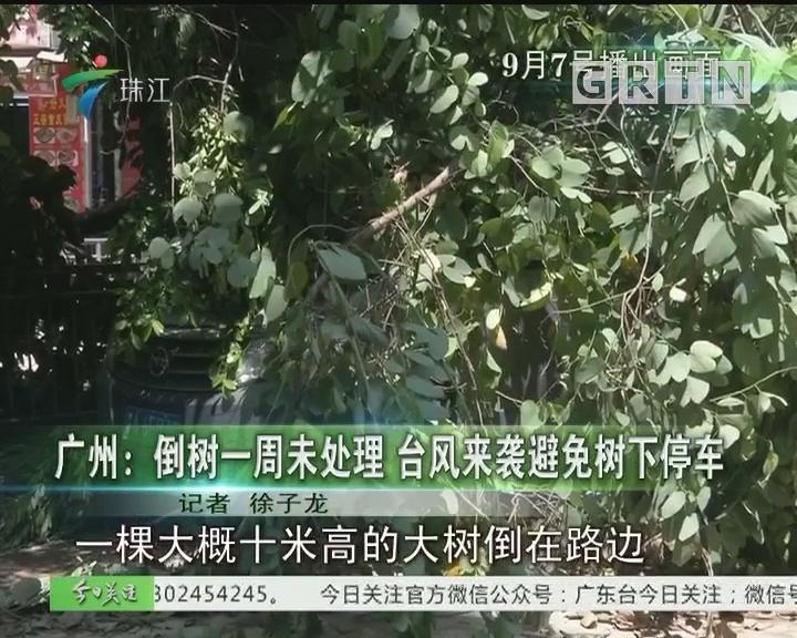广州:倒树一周未处理 台风来袭避免树下停车