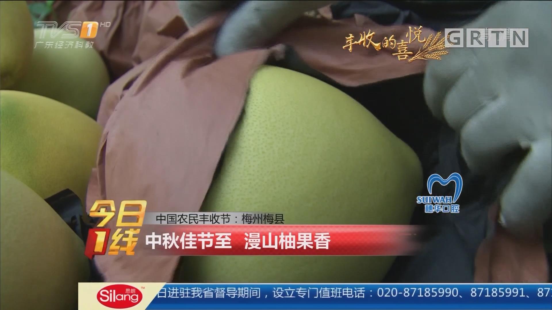 中国农民丰收节:梅州梅县 中秋佳节至 漫山柚果香