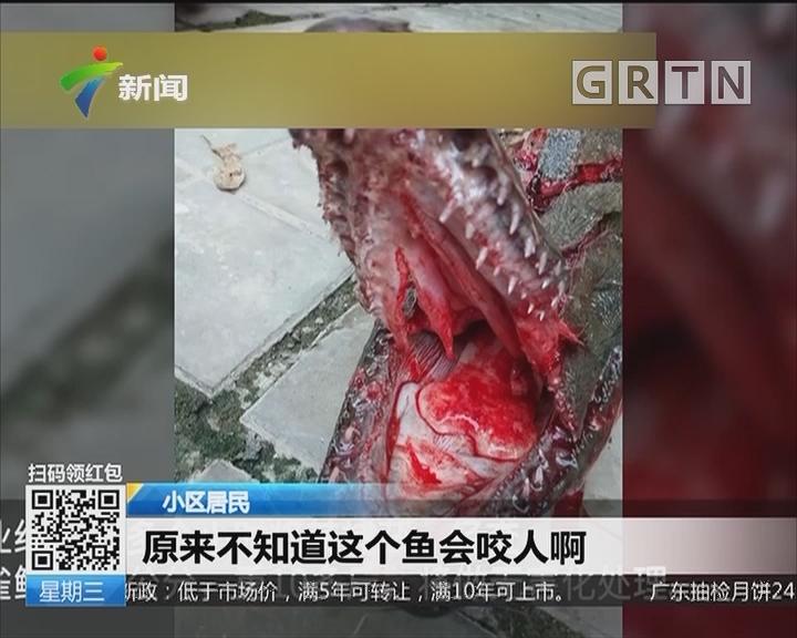 """广西南宁:小区景观池惊现""""杀手鱼"""" 9岁女孩投食被咬伤"""