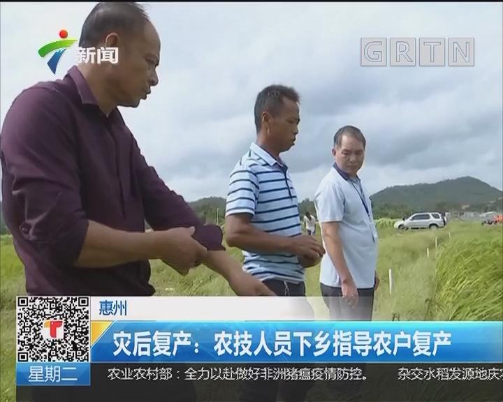 惠州 灾后复产:农技人员下乡指导农户复产