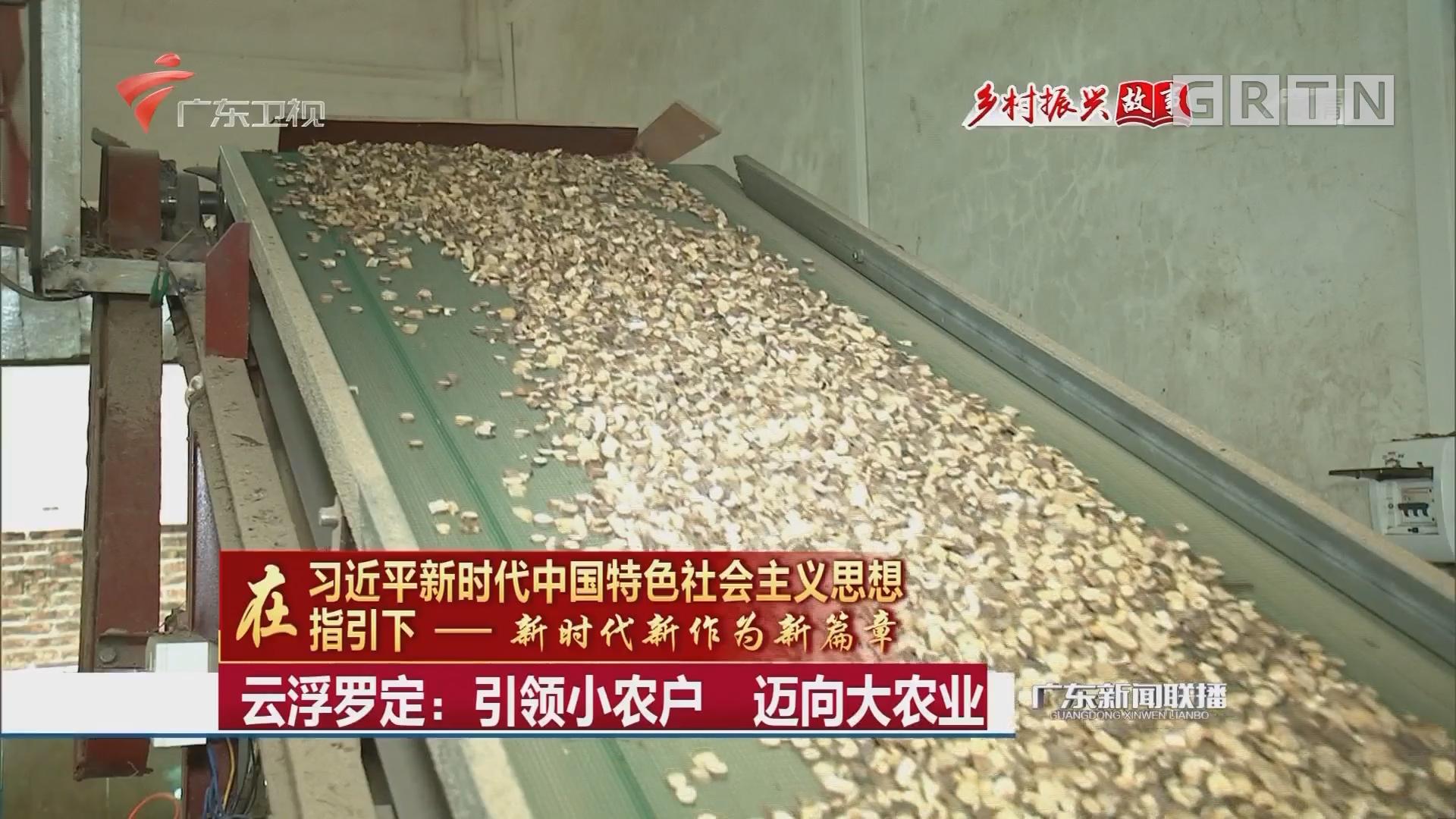 云浮罗定:引领小农户 迈向大农业