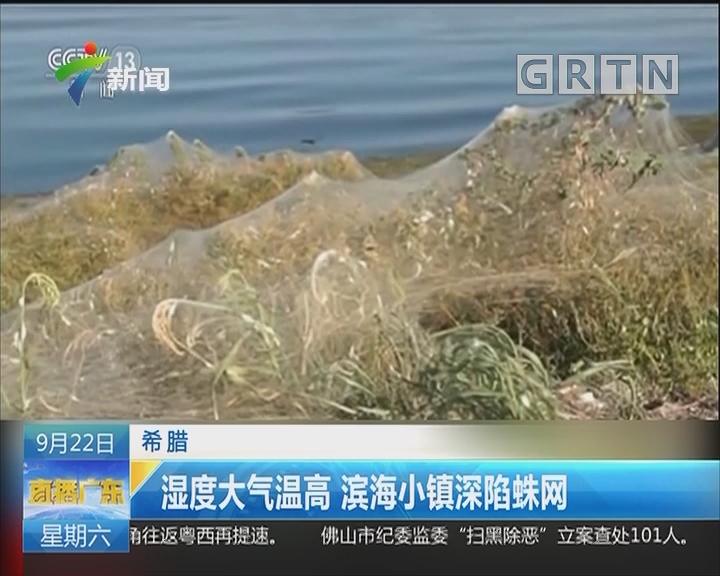 希腊:湿度大气温高 滨海小镇深陷蛛网