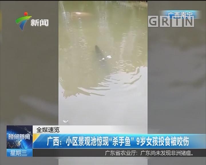 """广西:小区景观池惊现""""杀手鱼"""" 9岁女孩投食被咬伤"""