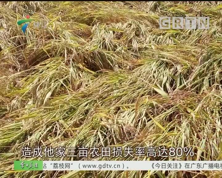 省农业厅:农业保险水稻保额翻倍 至每亩800元