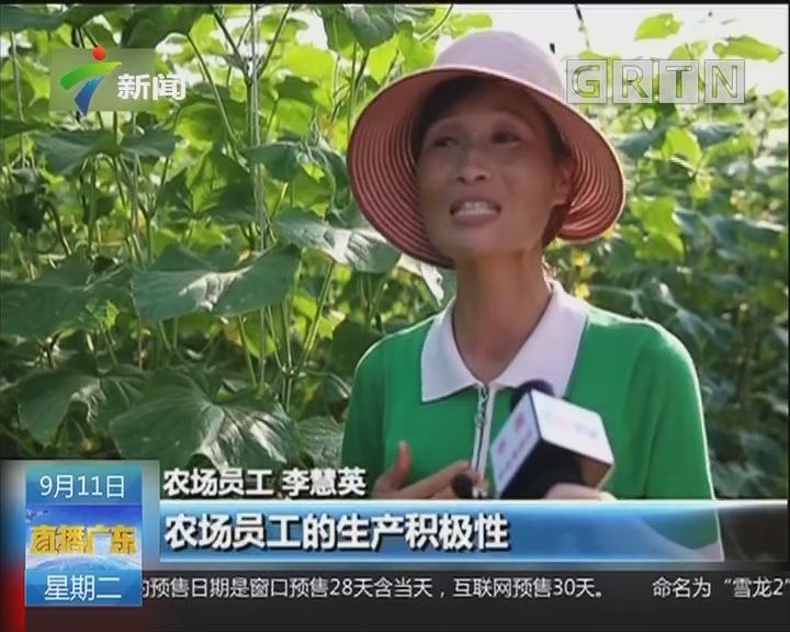 记者探访:朝鲜农业发展标杆——将泉农场