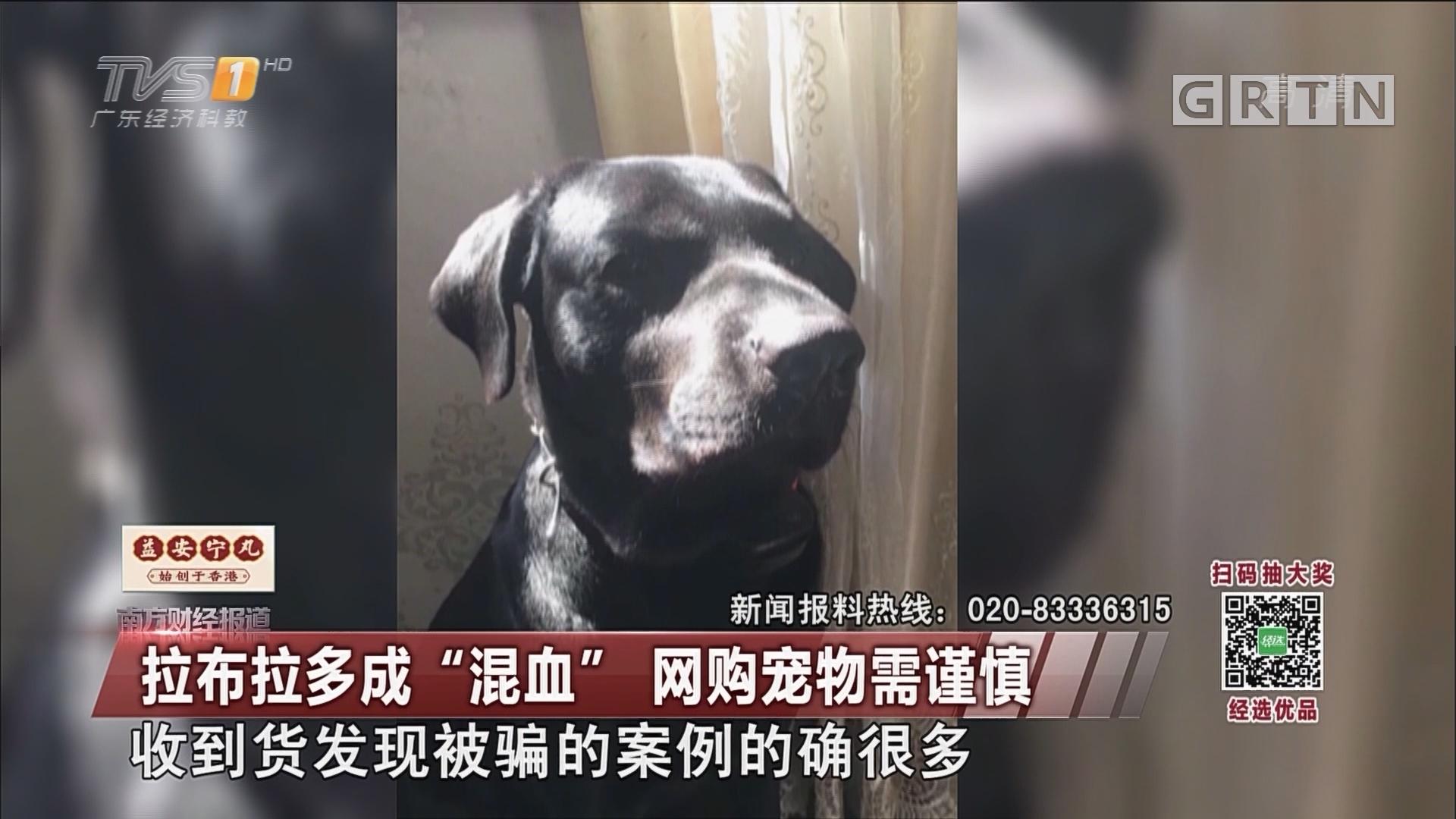 """拉布拉多成""""混血"""" 网购宠物需谨慎"""