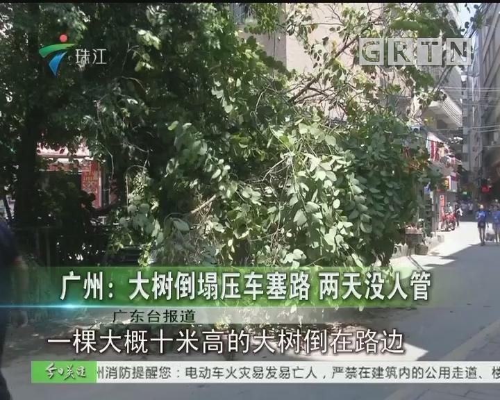 广州:大树倒塌压车塞路 两天没人管