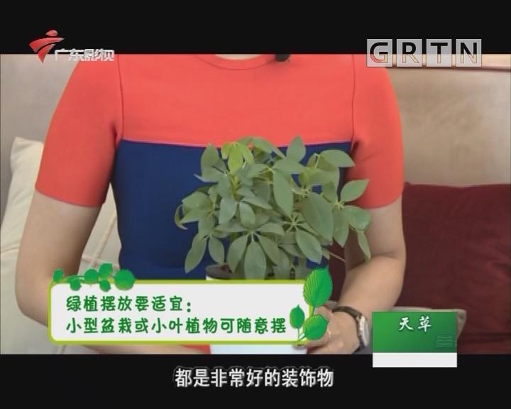 为家中绿植选择适宜的摆放位置