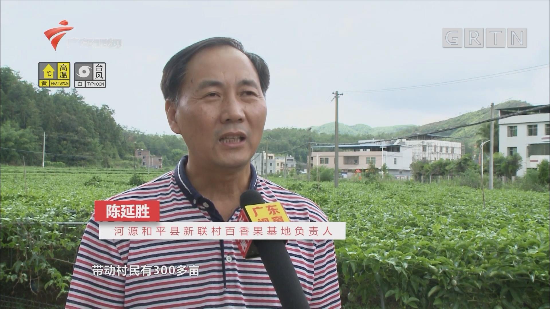 [HD][2018-09-15]广东视窗:河源市和平县:以奖补促产业 变输血为造血