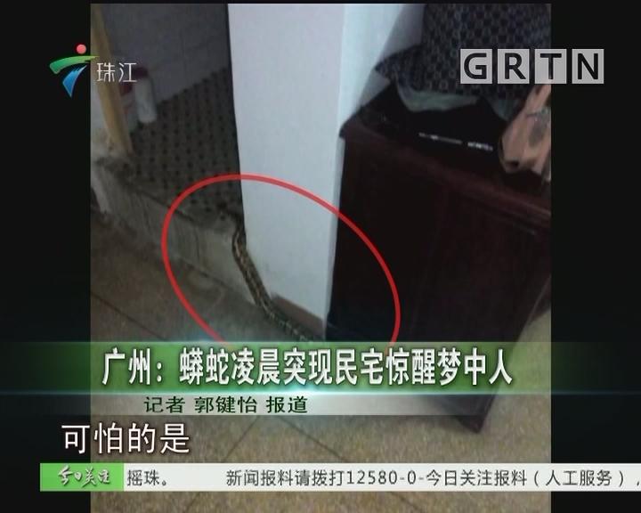广州:蟒蛇凌晨突现民宅惊醒梦中人