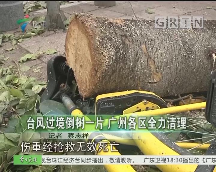 台风过境倒树一片 广州各区全力清理