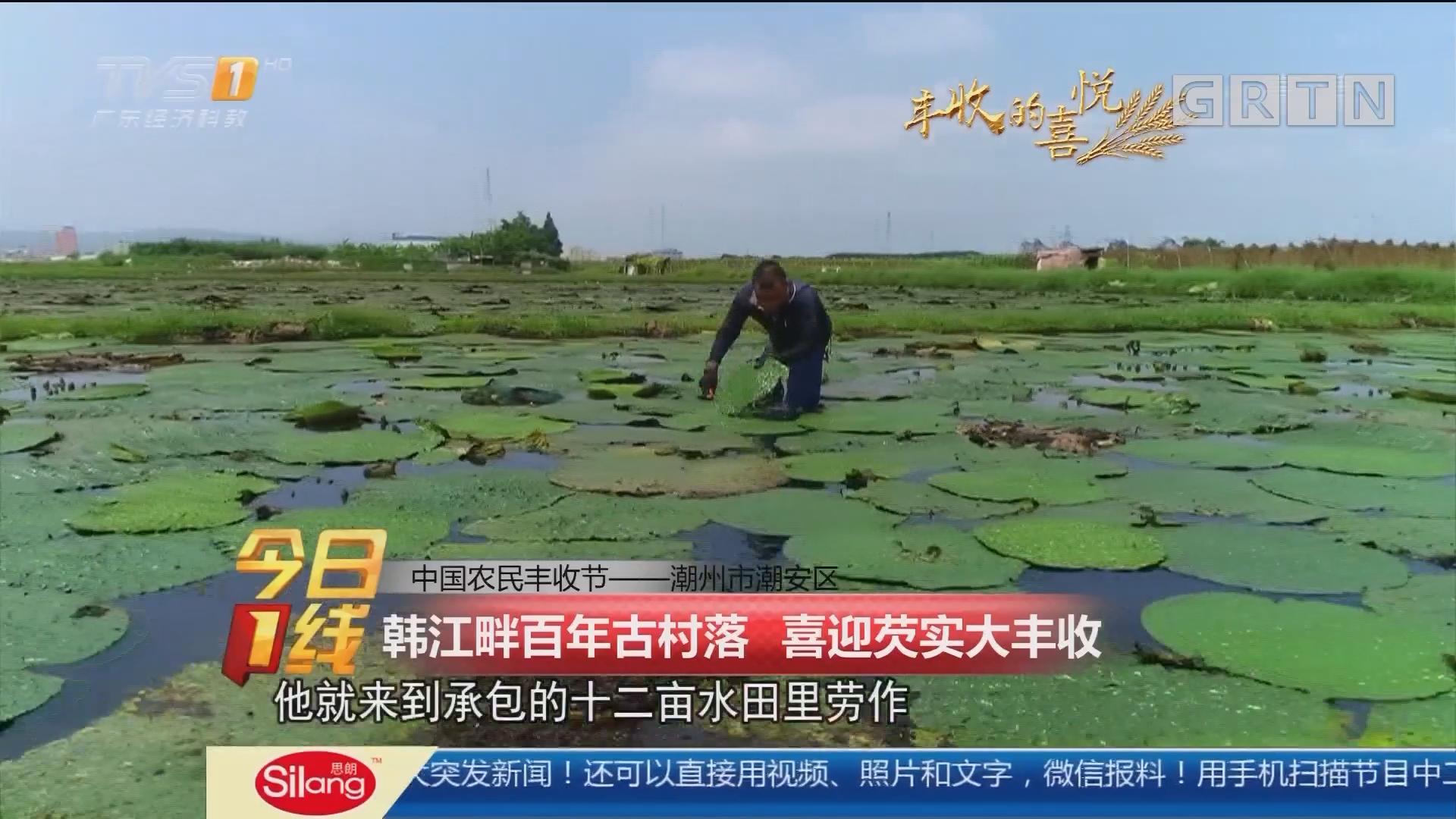 中国农民丰收节——潮州市潮安区 韩江畔百年古村落 喜迎芡实大丰收