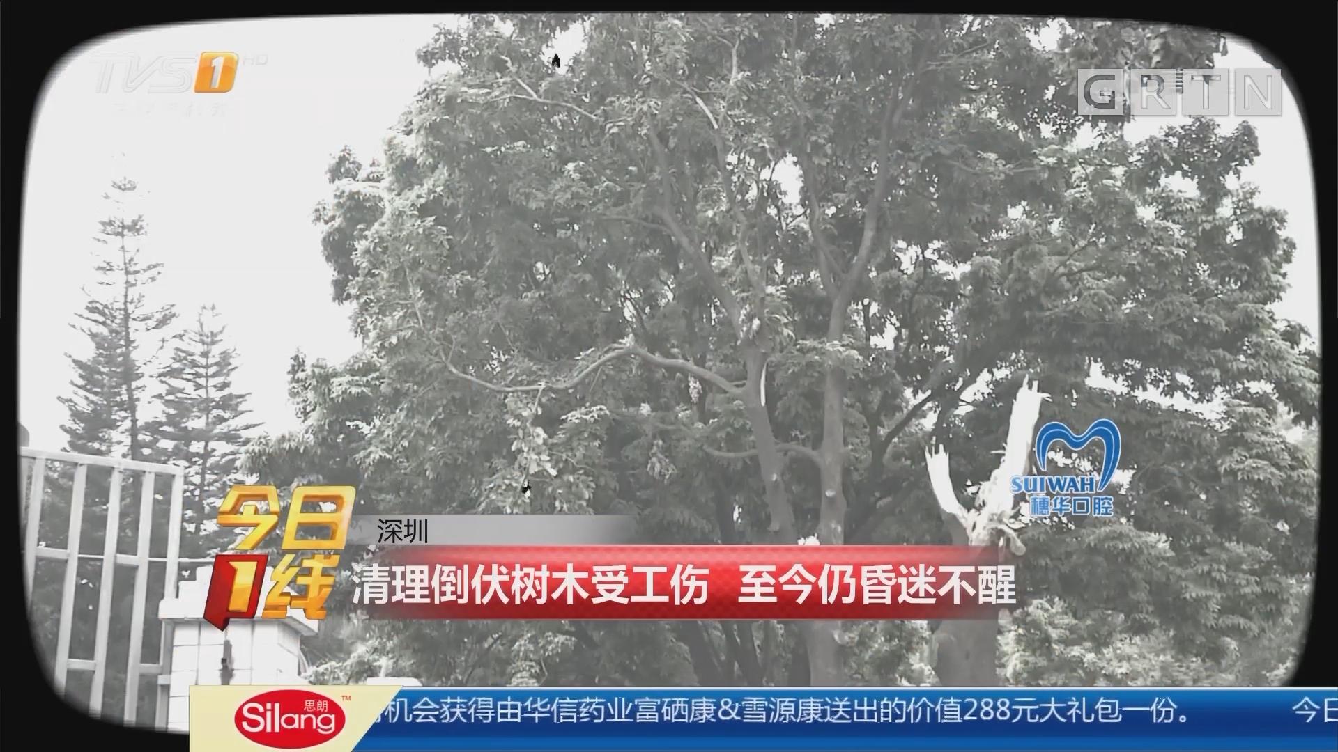 深圳:清理倒伏树木受工伤 至今仍昏迷不醒
