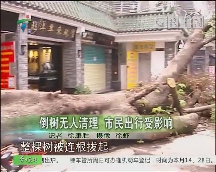 倒树无人清理 市民出行受影响