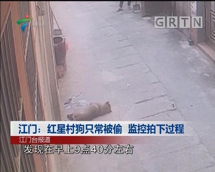 江门:红星村狗只常被偷 监控拍下过程