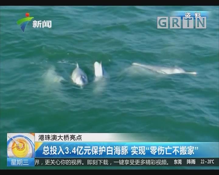 """港珠澳大桥亮点:总投入3.4亿元保护白海豚 实现""""零伤亡不搬家"""""""