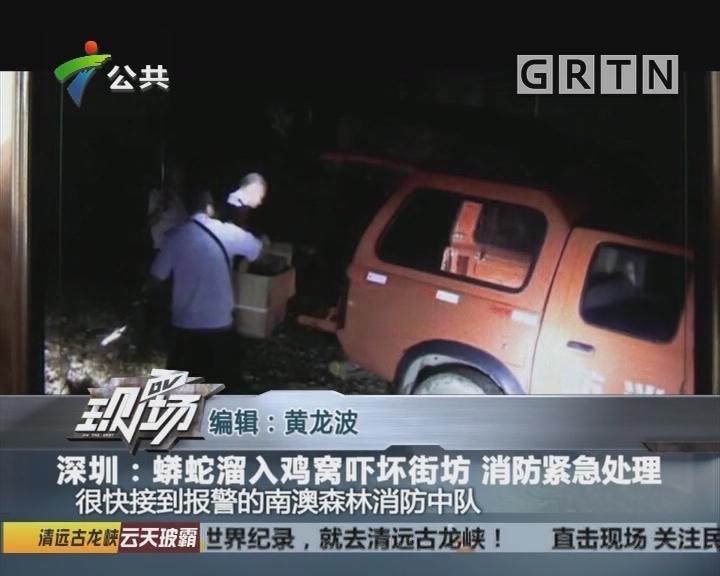 深圳:蟒蛇溜入鸡窝吓坏街坊 消防紧急处理