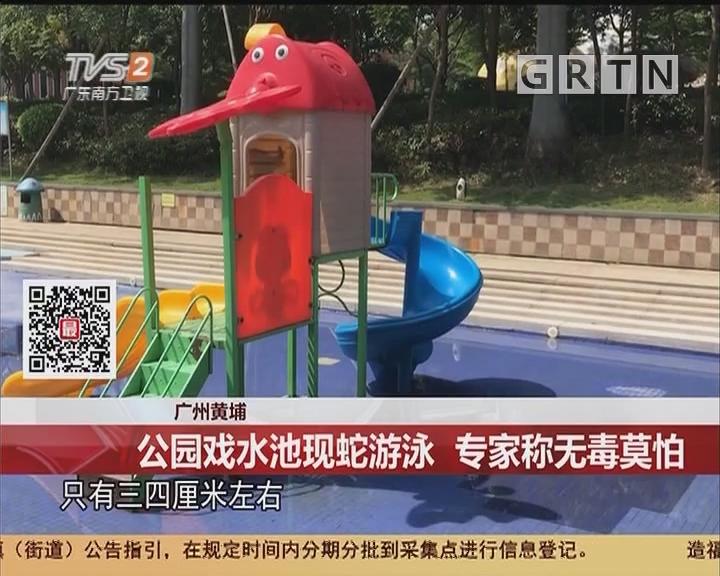 广州黄埔:公园戏水池现蛇游泳 专家称无毒莫怕