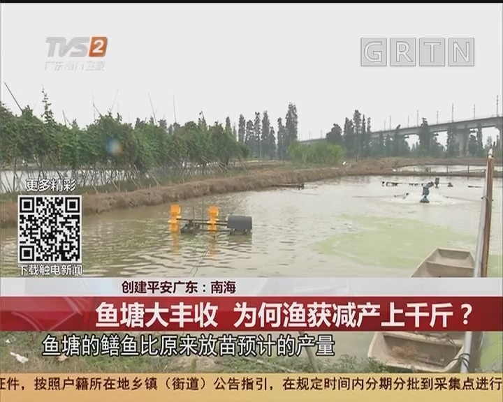 创建平安广东:南海 鱼塘大丰收 为何渔获减产上千斤?
