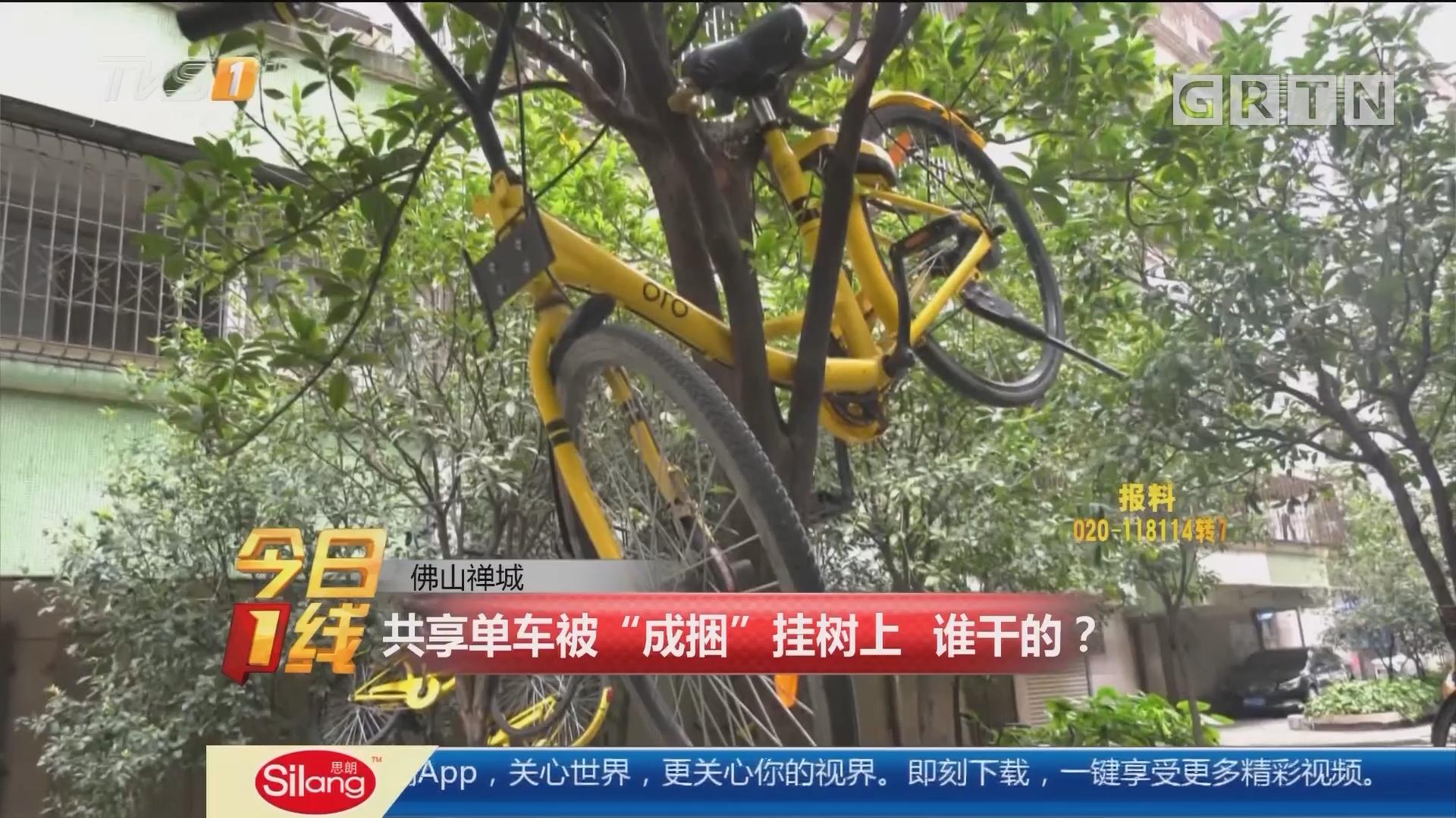 """佛山禅城:共享单车被""""成捆""""挂树上 谁干的?"""