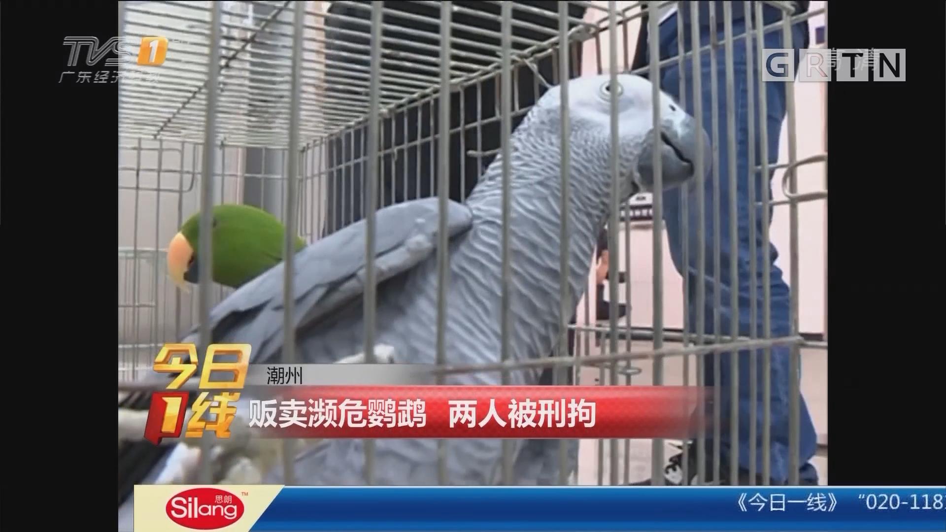 潮州:贩卖濒危鹦鹉 两人被刑拘