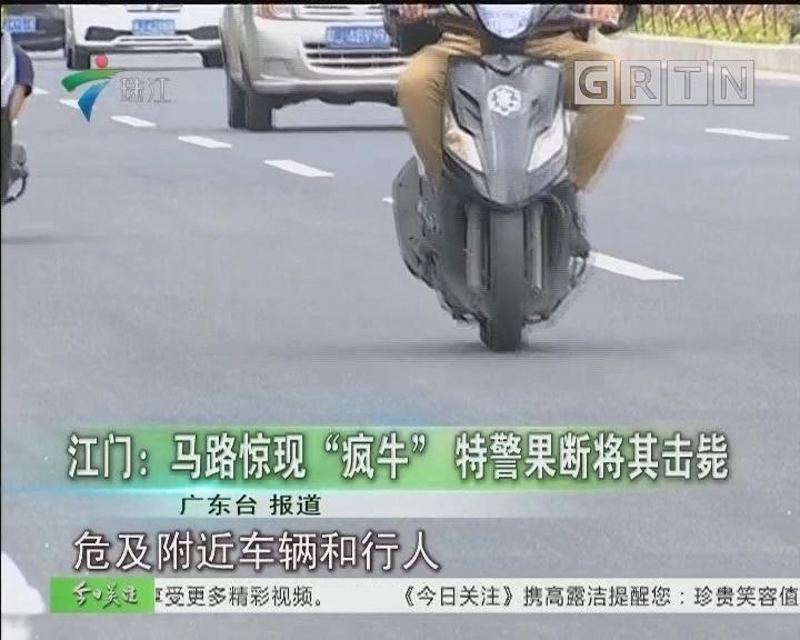 """江门:马路惊现""""疯牛"""" 特警果断将其击毙"""