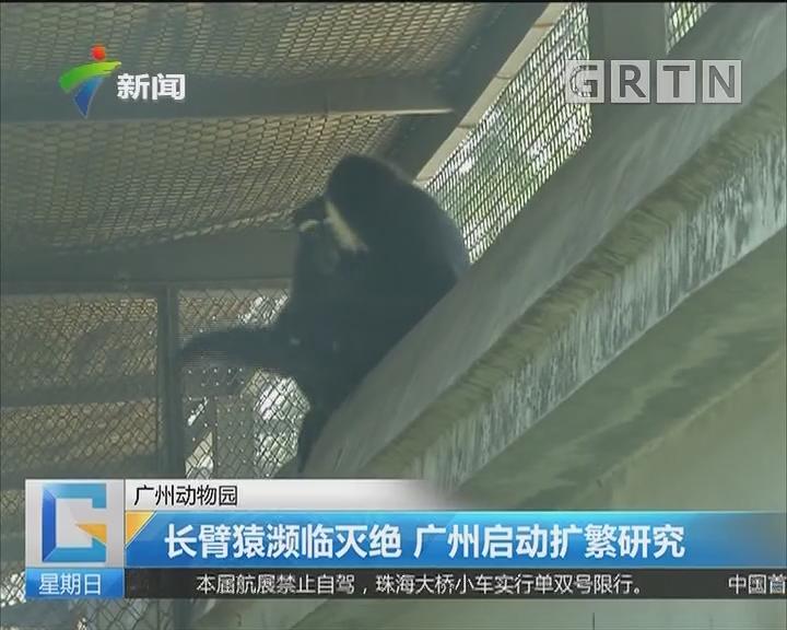 广州动物园:长臂猿濒临灭绝 广州启动扩繁研究