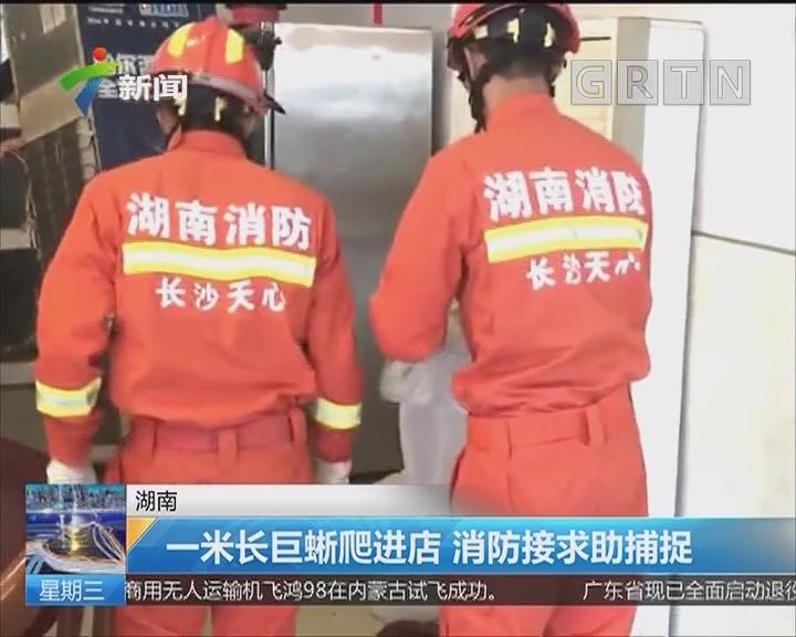 湖南:一米长巨蜥爬进店 消防接求助捕捉