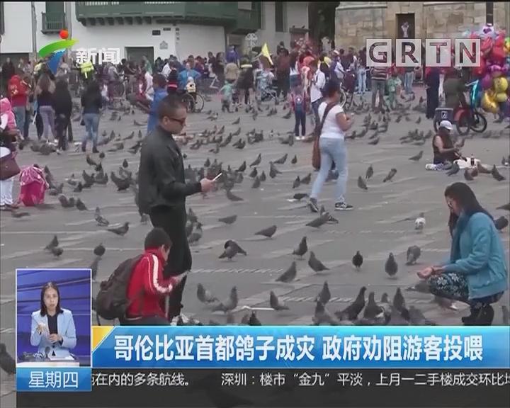 哥伦比亚首都鸽子成灾 政府劝阻游客投喂