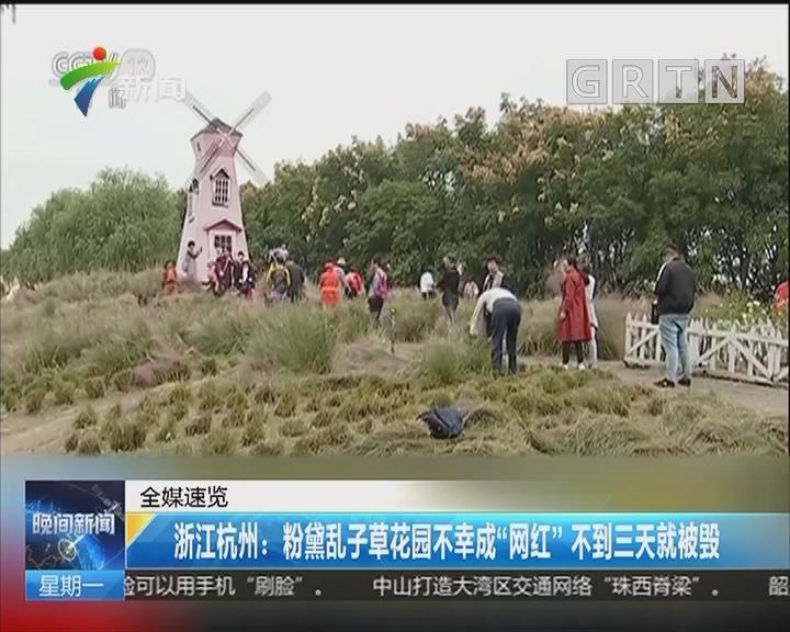 """浙江杭州:粉黛乱子草花园不幸成""""网红"""" 不到三天就被毁"""