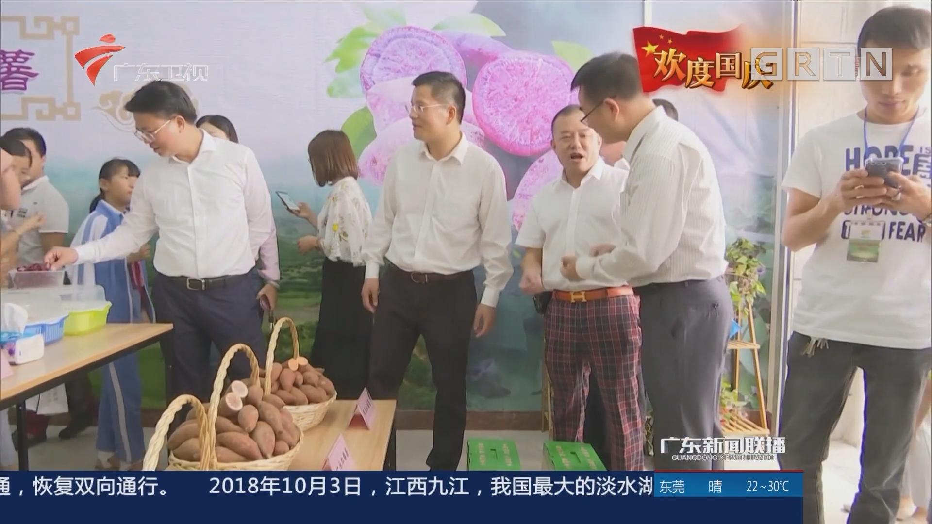 广东:乡村文化活动别具特色 展示农村发展新变化