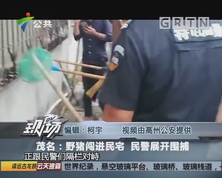 茂名:野猪闯进民宅 民警展开围捕