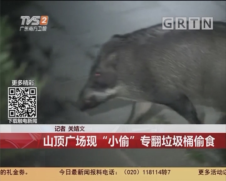 """深圳:山顶广场现""""小偷""""专翻垃圾桶偷食"""