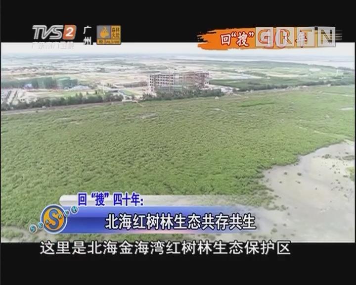 """回""""搜""""四十年:北海红树林生态共存共生"""