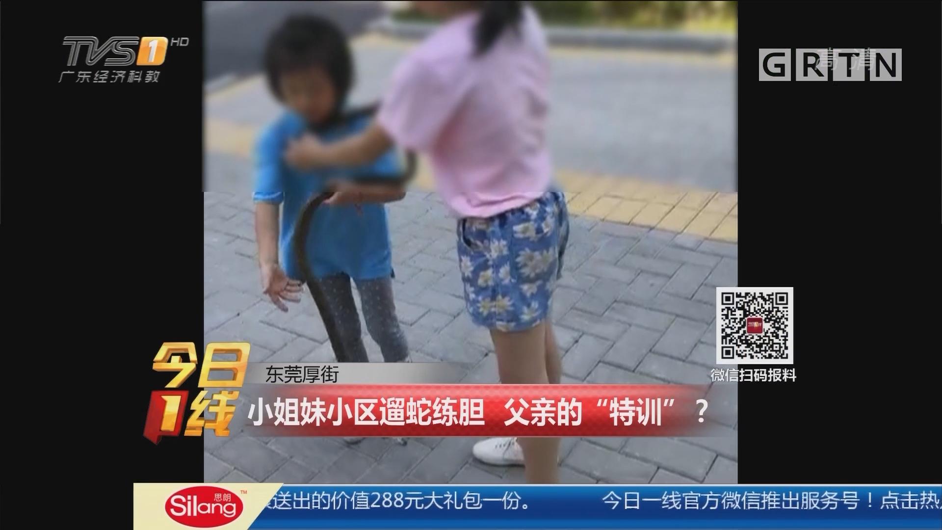 """东莞厚街:小姐妹小区遛蛇练胆 父亲的""""特训""""?"""