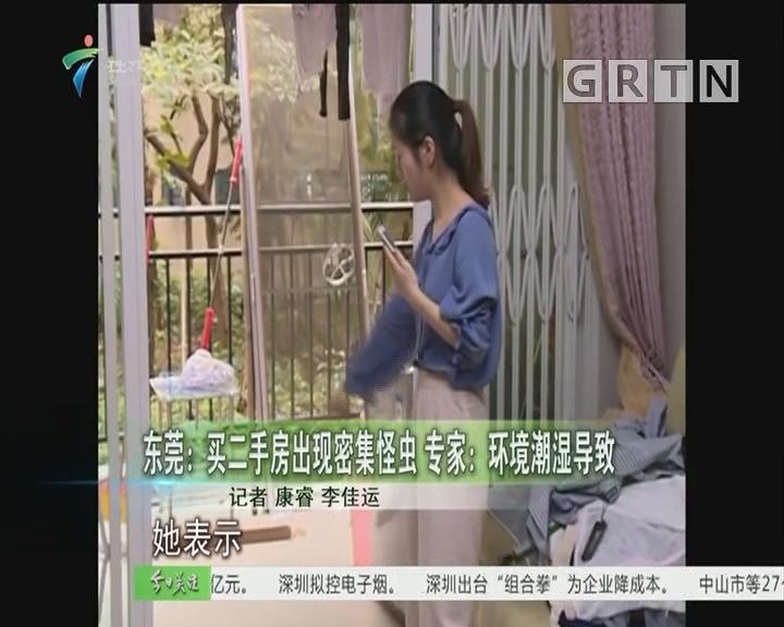 东莞:买二手房出现密集怪虫 专家:环境潮湿导致