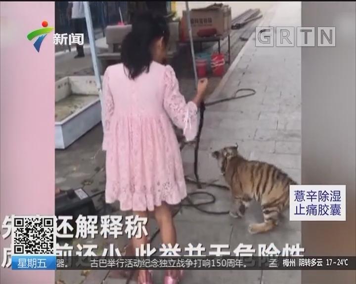 泉州:9岁女孩遛老虎 公园:小老虎还没咬人能力