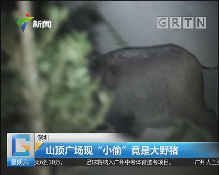"""深圳:山顶广场现""""小偷"""" 竟是大野猪"""