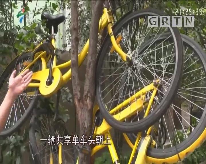 """佛山:共享单车竟被""""成捆""""挂树上"""
