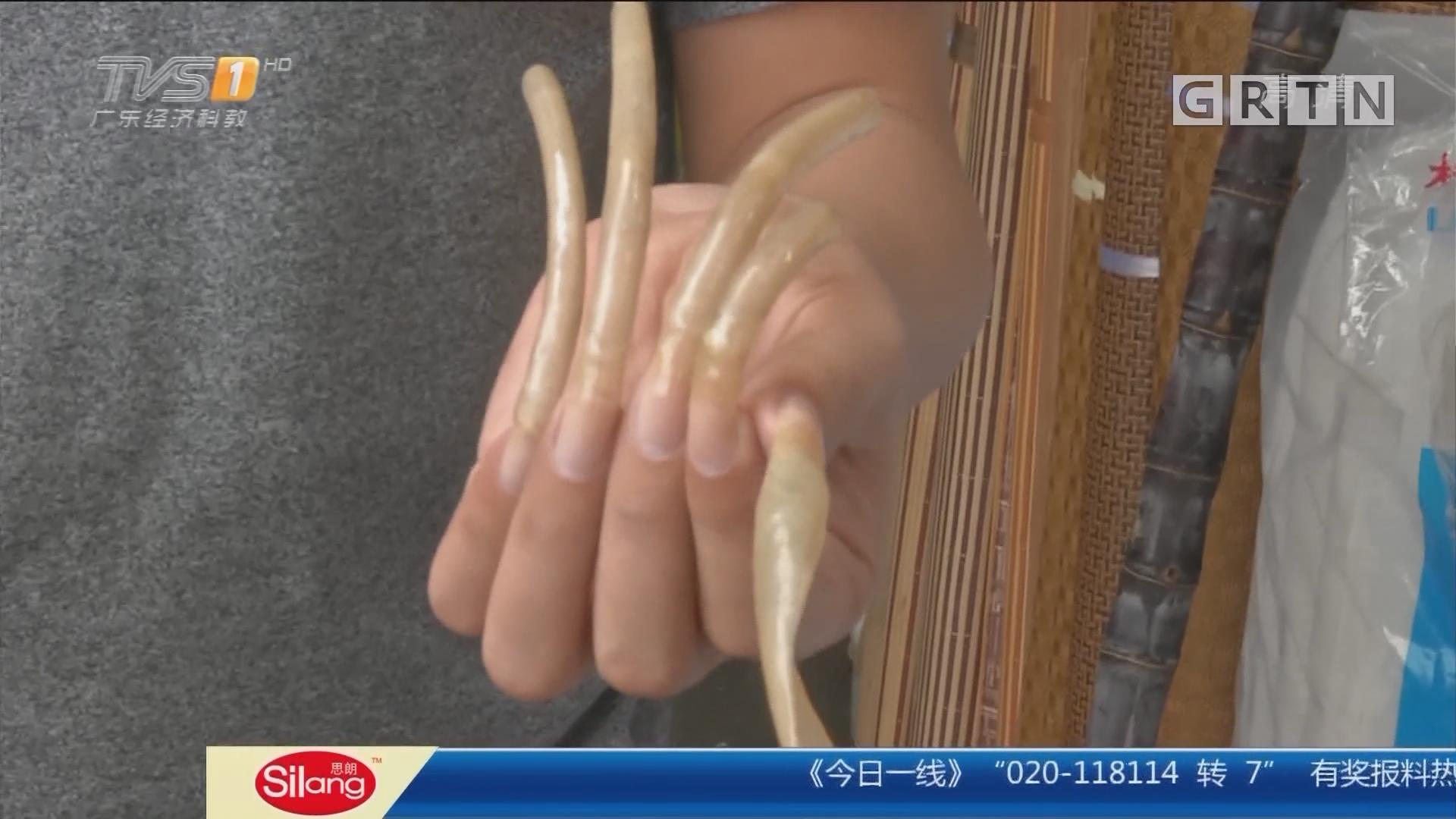广州番禺:8年留13厘米长指甲 每次护理花费千元
