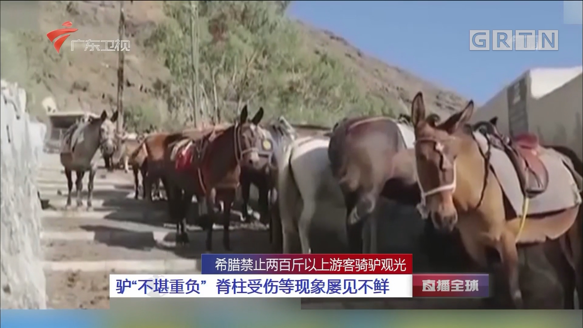 """希腊禁止两百斤以上游客骑驴观光 驴""""不堪重负"""" 脊柱受伤等现象屡见不鲜"""
