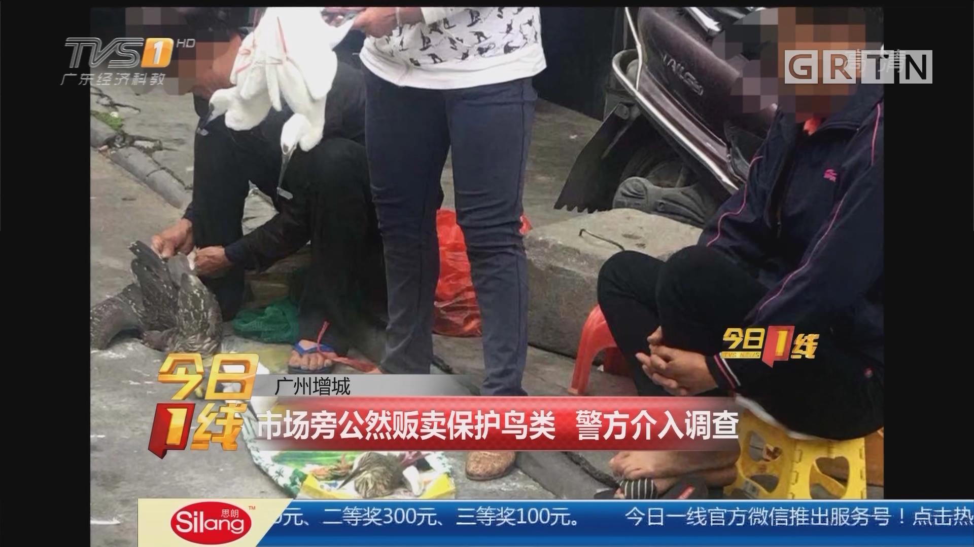 广州增城:市场旁公然贩卖保护鸟类 警方介入调查