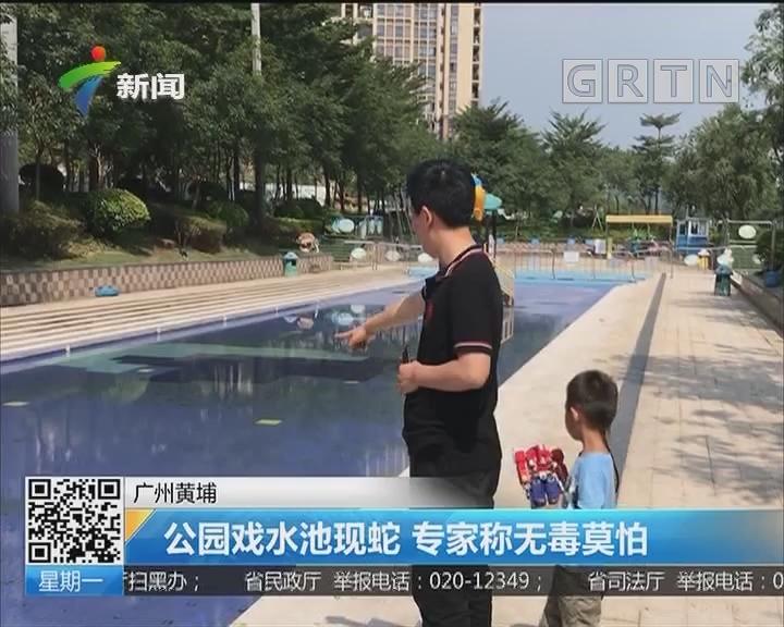 广州黄埔:公园戏水池现蛇 专家称无毒莫怕