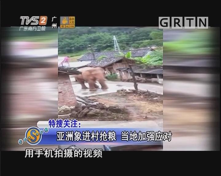 亚洲象进村抢粮 当地加强应对