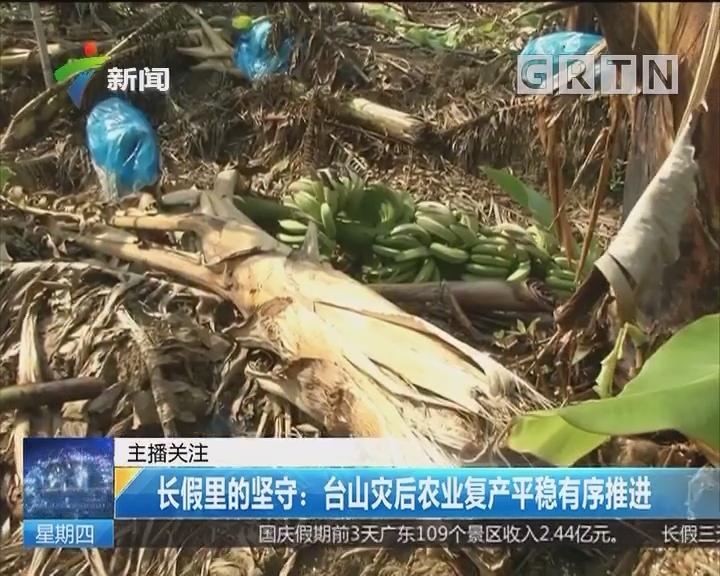 长假里的坚守:台山灾后农业复产平稳有序推进
