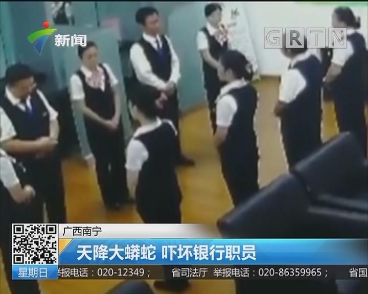 广西南宁:天降大蟒蛇 吓坏银行职员
